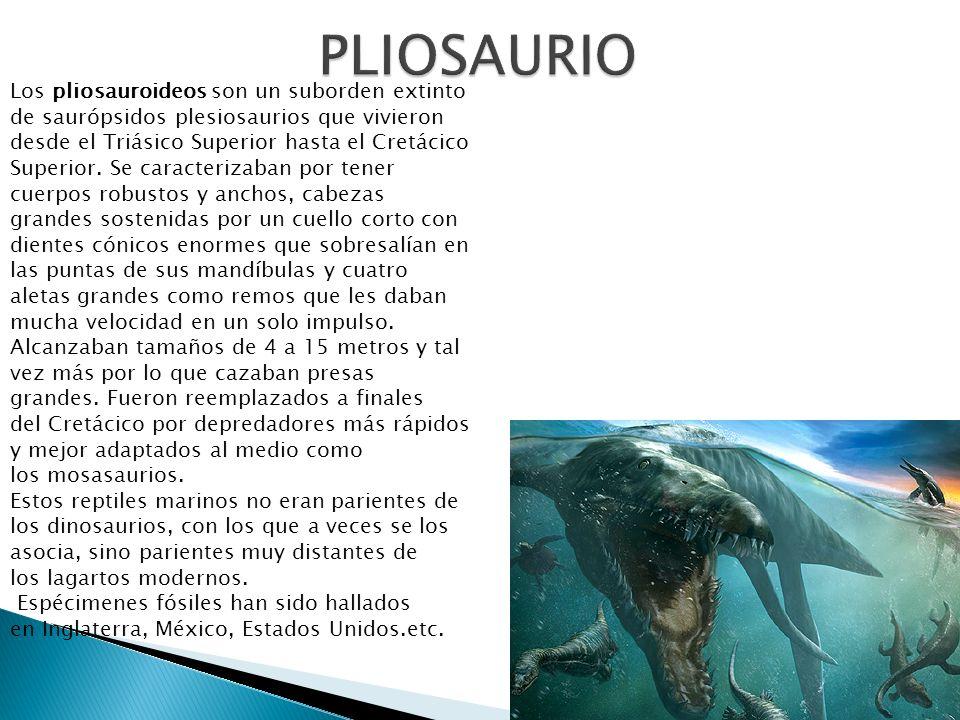 Los pliosauroideos son un suborden extinto de saurópsidos plesiosaurios que vivieron desde el Triásico Superior hasta el Cretácico Superior. Se caract