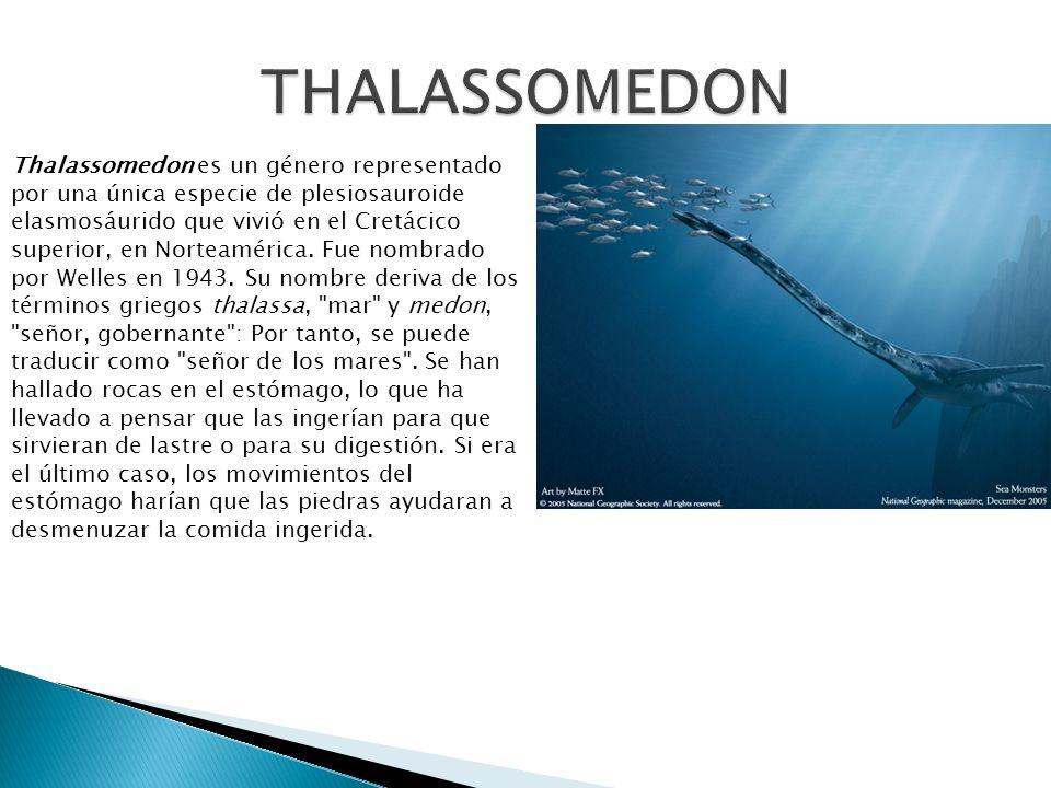 Thalassomedon es un género representado por una única especie de plesiosauroide elasmosáurido que vivió en el Cretácico superior, en Norteamérica. Fue