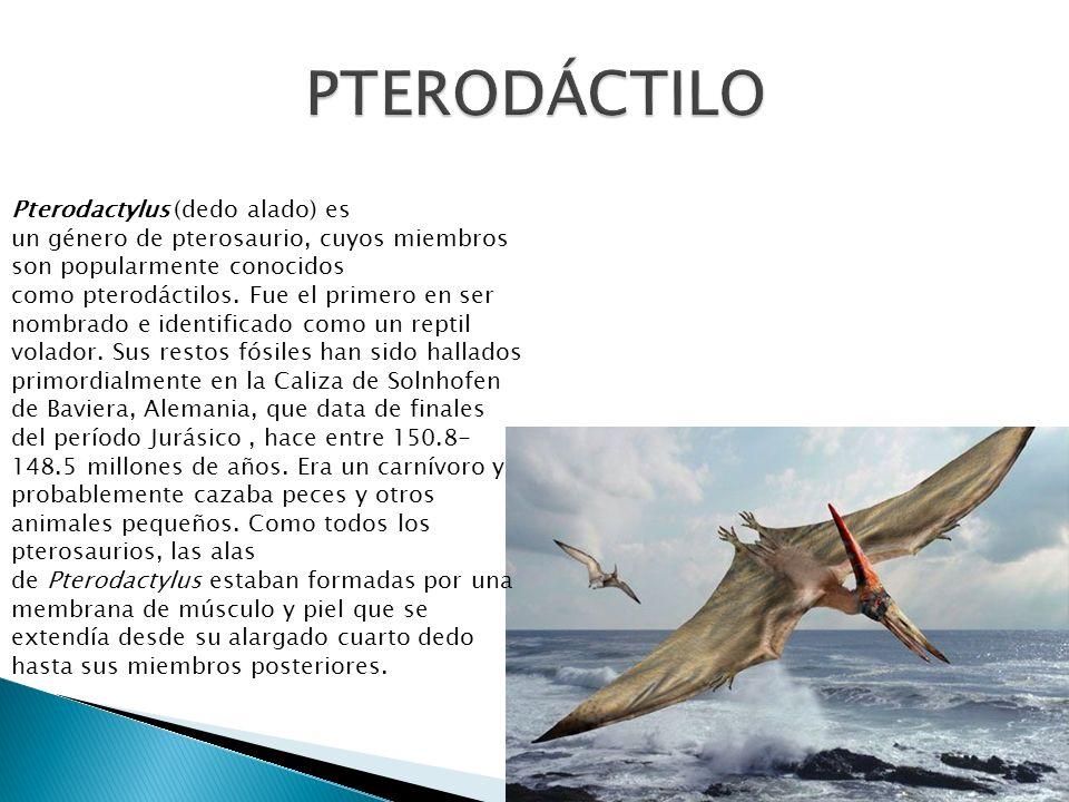 Pterodactylus (dedo alado) es un género de pterosaurio, cuyos miembros son popularmente conocidos como pterodáctilos. Fue el primero en ser nombrado e
