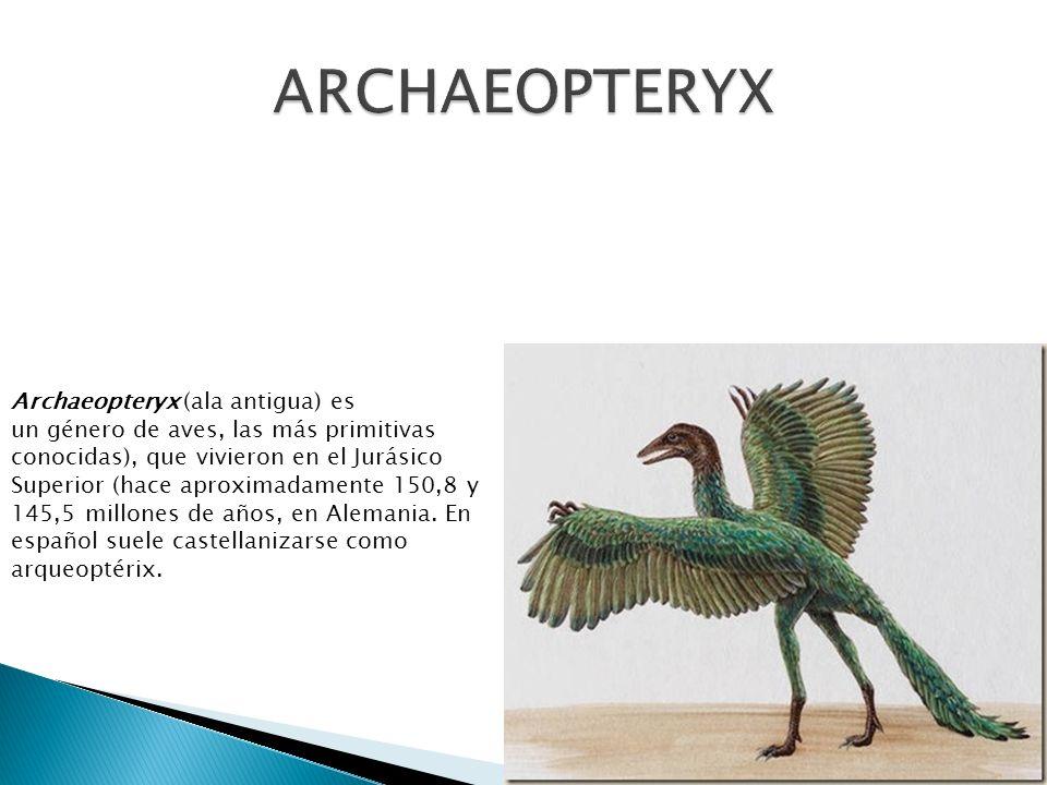 Archaeopteryx (ala antigua) es un género de aves, las más primitivas conocidas), que vivieron en el Jurásico Superior (hace aproximadamente 150,8 y 14