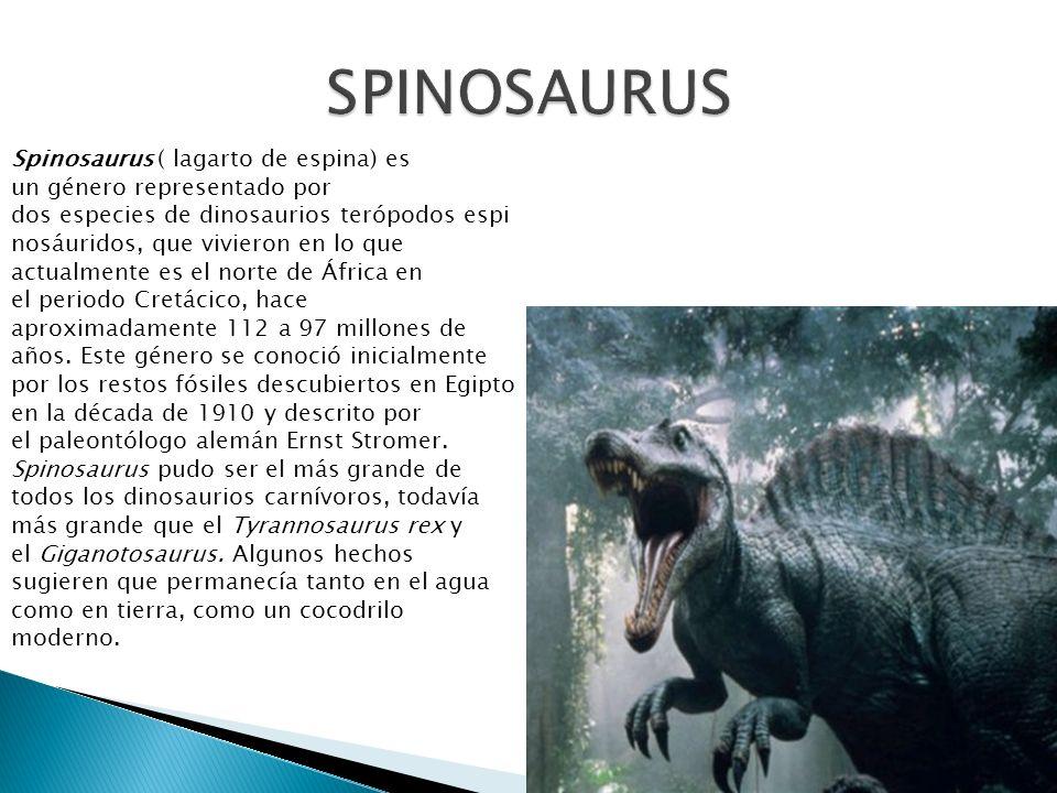 Spinosaurus ( lagarto de espina) es un género representado por dos especies de dinosaurios terópodos espi nosáuridos, que vivieron en lo que actualmen