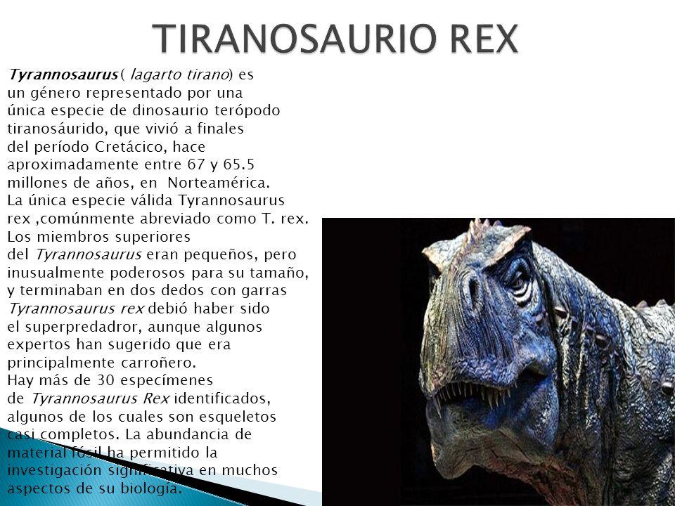Tyrannosaurus ( lagarto tirano) es un género representado por una única especie de dinosaurio terópodo tiranosáurido, que vivió a finales del período