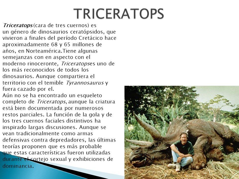Triceratops (cara de tres cuernos) es un género de dinosaurios ceratópsidos, que vivieron a finales del período Cretácico hace aproximadamente 68 y 65