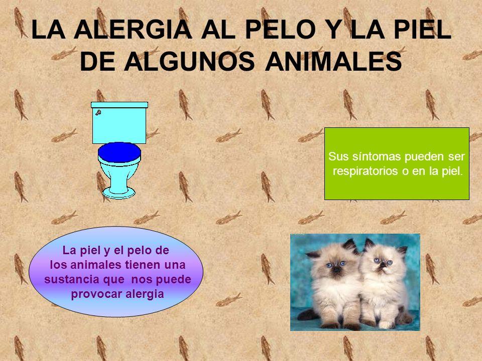 LA ALERGIA AL PELO Y LA PIEL DE ALGUNOS ANIMALES La piel y el pelo de los animales tienen una sustancia que nos puede provocar alergia Sus síntomas pueden ser respiratorios o en la piel.
