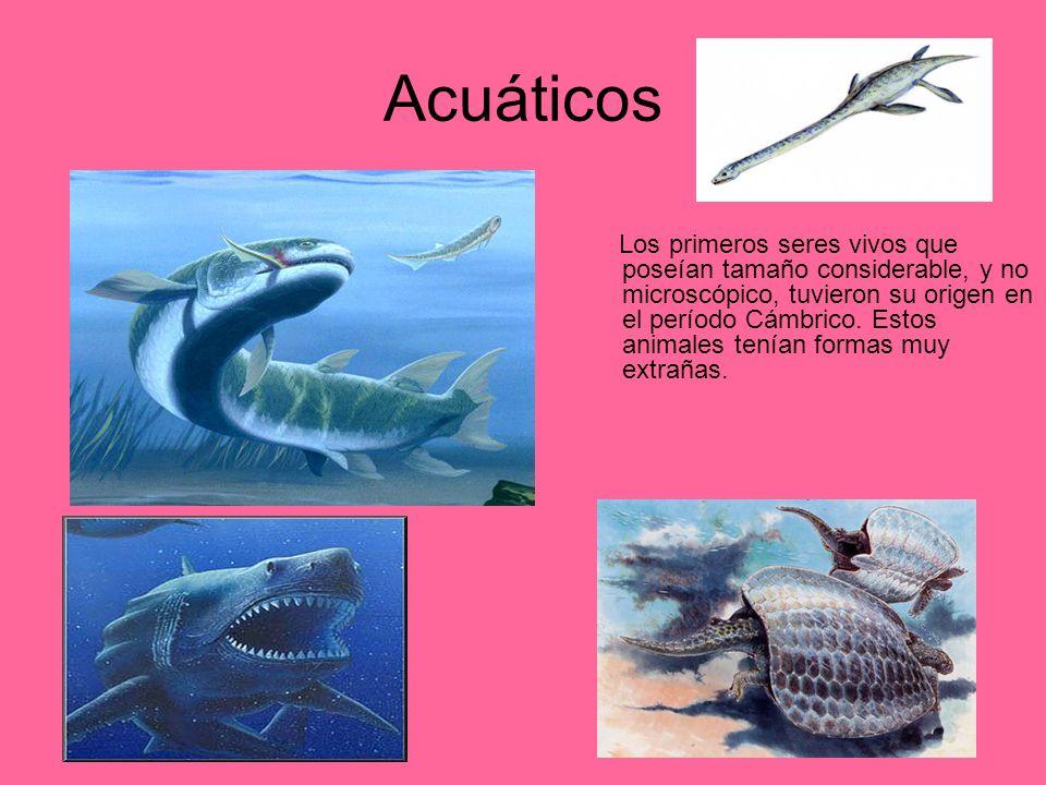 Acuáticos Los primeros seres vivos que poseían tamaño considerable, y no microscópico, tuvieron su origen en el período Cámbrico. Estos animales tenía