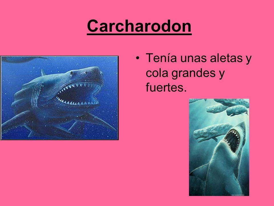 Carcharodon Tenía unas aletas y cola grandes y fuertes.