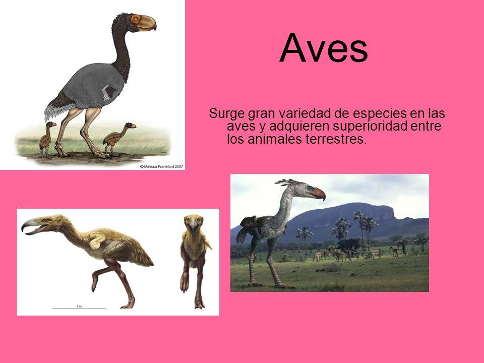 Aves Surge gran variedad de especies en las aves y adquieren superioridad entre los animales terrestres.