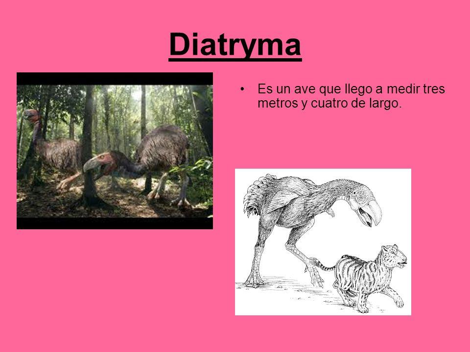 Diatryma Es un ave que llego a medir tres metros y cuatro de largo.
