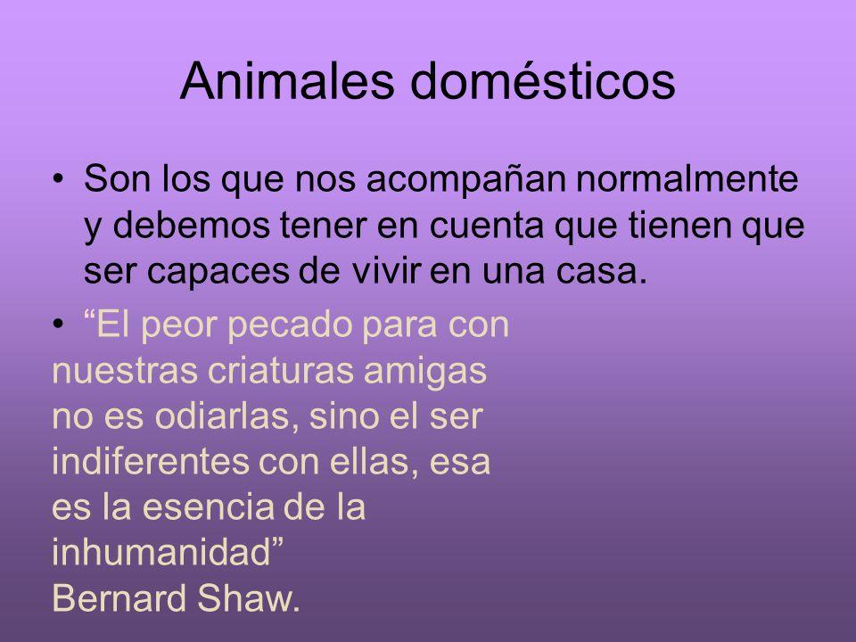 Animales domésticos Son los que nos acompañan normalmente y debemos tener en cuenta que tienen que ser capaces de vivir en una casa. El peor pecado pa