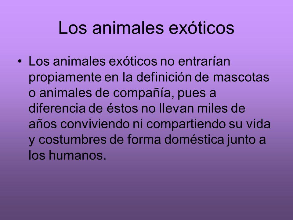 Los animales exóticos Los animales exóticos no entrarían propiamente en la definición de mascotas o animales de compañía, pues a diferencia de éstos n