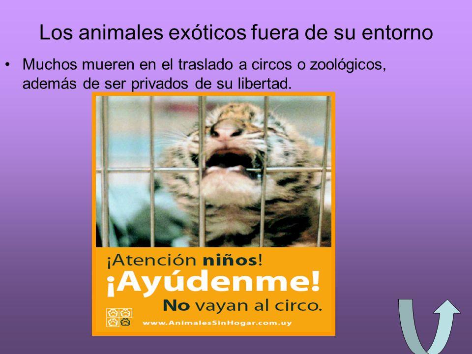 ¿Los animales sienten.