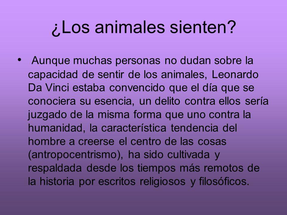 ¿Los animales sienten? Aunque muchas personas no dudan sobre la capacidad de sentir de los animales, Leonardo Da Vinci estaba convencido que el día qu