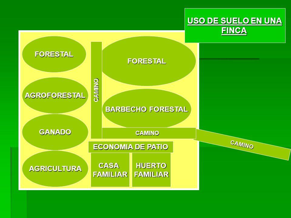 FORESTAL AGROFORESTAL GANADO AGRICULTURA FORESTAL BARBECHO FORESTAL CASAFAMILIARHUERTOFAMILIAR ECONOMIA DE PATIO CAMINO USO DE SUELO EN UNA FINCA CAMINO CAMINO