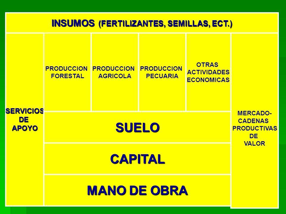 INSUMOS (FERTILIZANTES, SEMILLAS, ECT.) SERVICIOSDEAPOYO PRODUCCION FORESTAL PRODUCCION AGRICOLA PRODUCCION PECUARIA OTRAS ACTIVIDADES ECONOMICAS MERCADO- CADENAS PRODUCTIVAS DE VALOR SUELO CAPITAL MANO DE OBRA