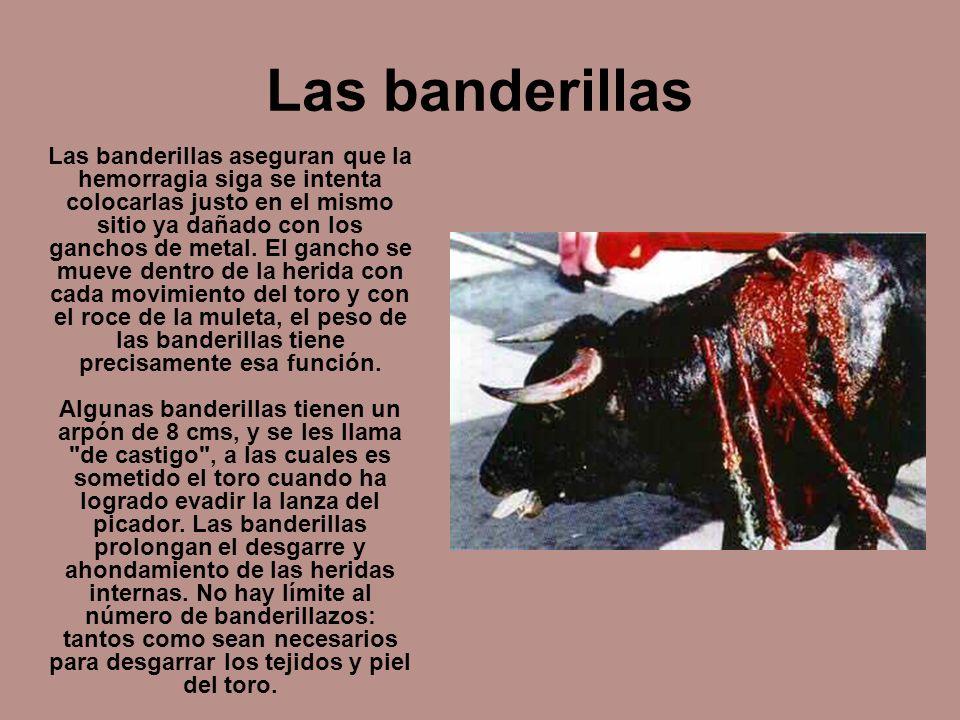 Las banderillas Las banderillas aseguran que la hemorragia siga se intenta colocarlas justo en el mismo sitio ya dañado con los ganchos de metal. El g
