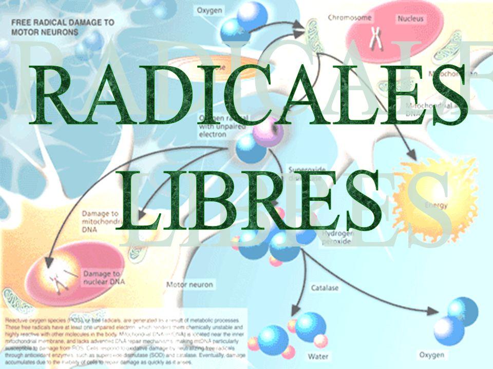 29/01/2014 12 Peroxidación lipídica