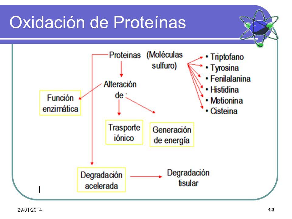 29/01/2014 13 Oxidación de Proteínas