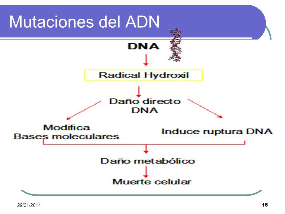 29/01/2014 15 Mutaciones del ADN