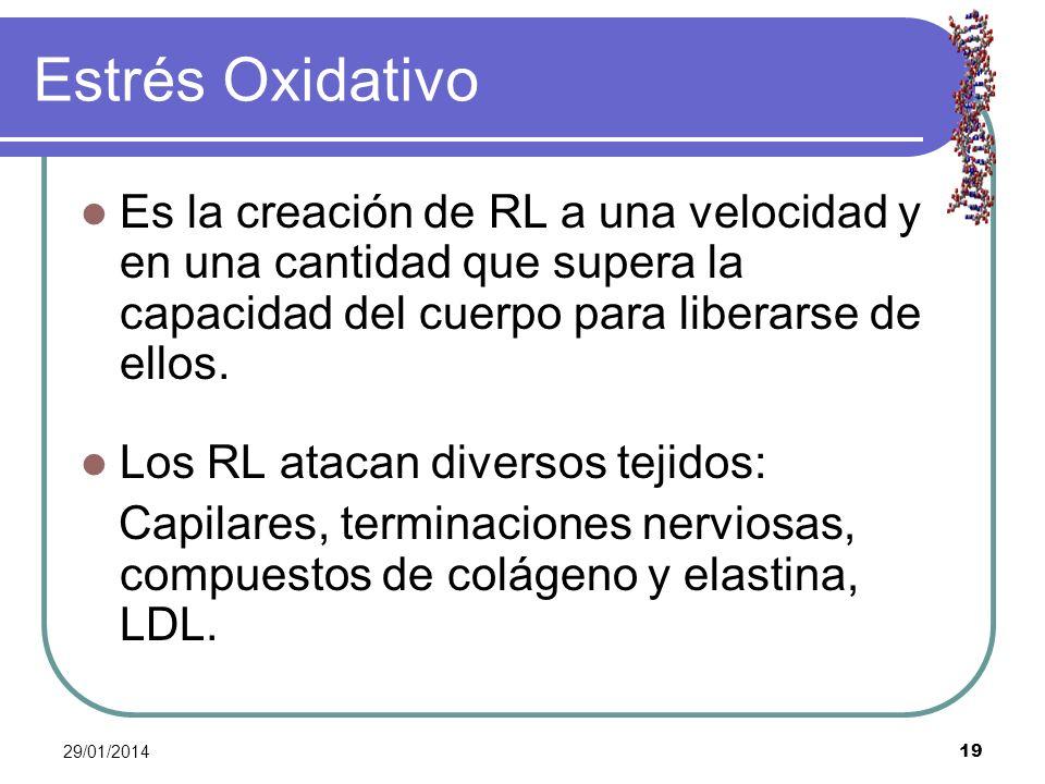 29/01/2014 19 Estrés Oxidativo Es la creación de RL a una velocidad y en una cantidad que supera la capacidad del cuerpo para liberarse de ellos. Los