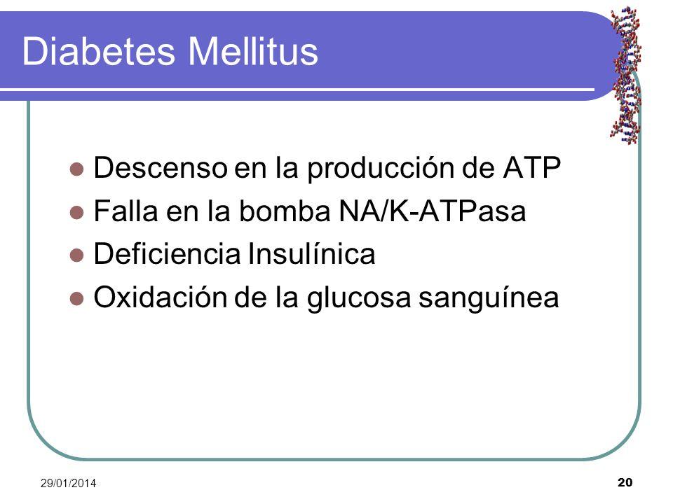 29/01/2014 20 Diabetes Mellitus Descenso en la producción de ATP Falla en la bomba NA/K-ATPasa Deficiencia Insulínica Oxidación de la glucosa sanguíne