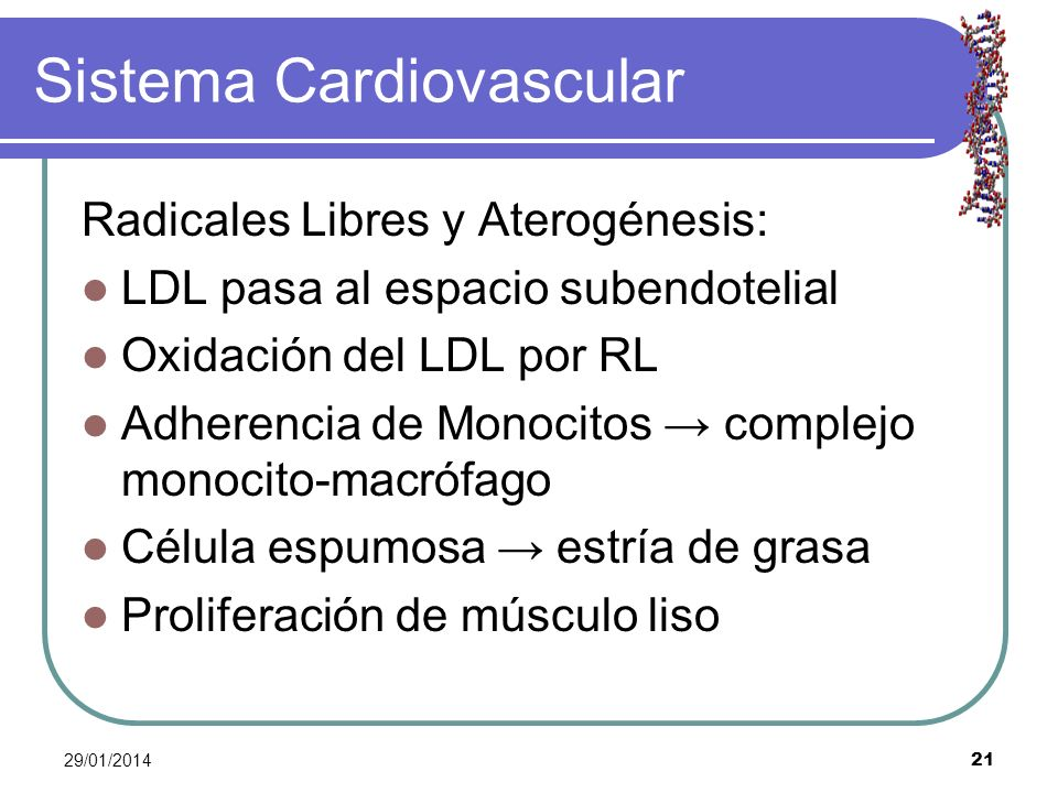 29/01/2014 21 Sistema Cardiovascular Radicales Libres y Aterogénesis: LDL pasa al espacio subendotelial Oxidación del LDL por RL Adherencia de Monocit