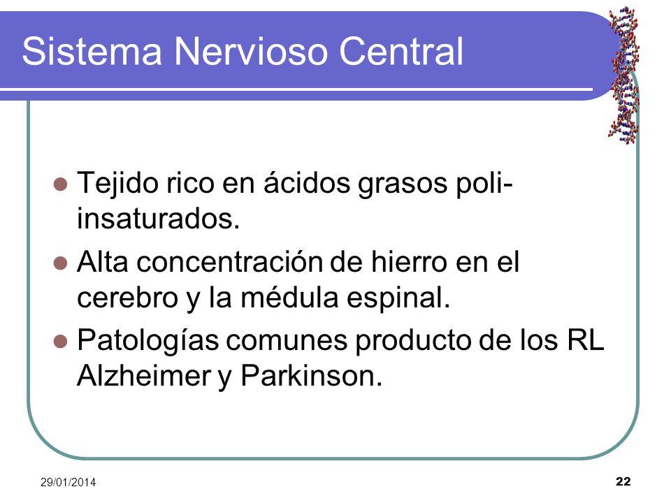29/01/2014 22 Sistema Nervioso Central Tejido rico en ácidos grasos poli- insaturados. Alta concentración de hierro en el cerebro y la médula espinal.