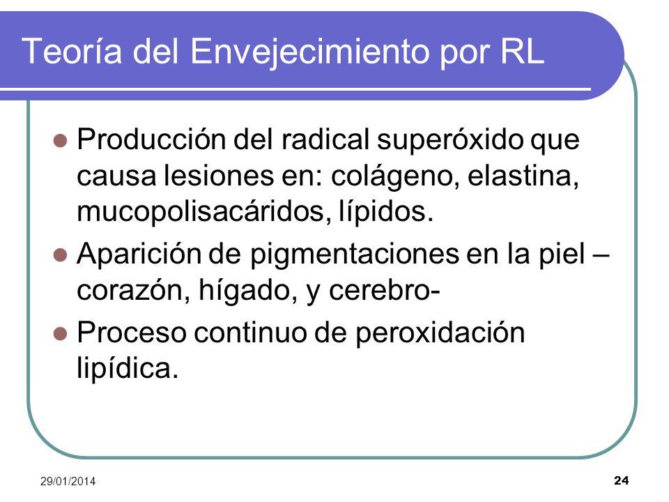 29/01/2014 24 Teoría del Envejecimiento por RL Producción del radical superóxido que causa lesiones en: colágeno, elastina, mucopolisacáridos, lípidos