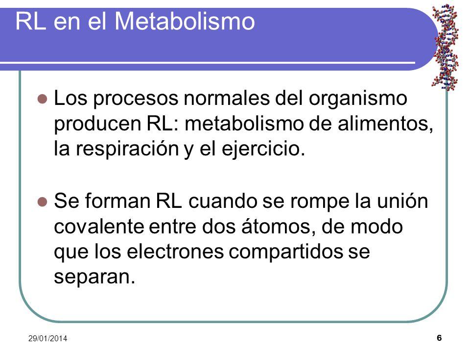 29/01/2014 6 RL en el Metabolismo Los procesos normales del organismo producen RL: metabolismo de alimentos, la respiración y el ejercicio. Se forman