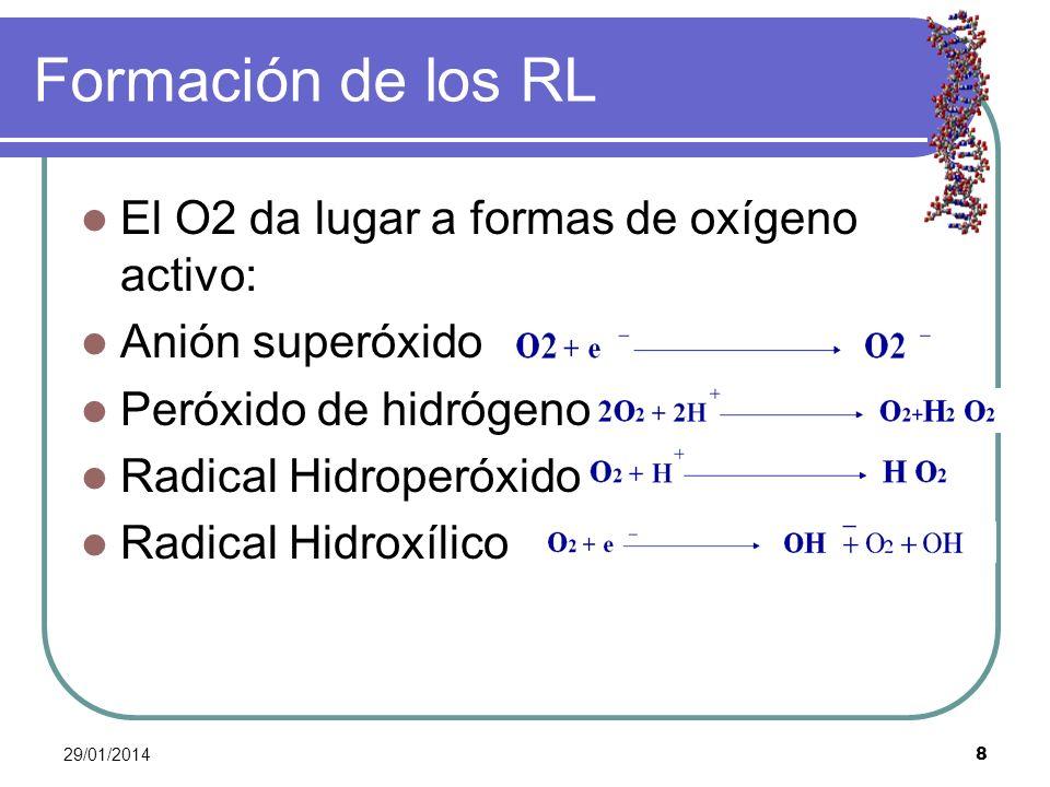 29/01/2014 8 Formación de los RL El O2 da lugar a formas de oxígeno activo: Anión superóxido Peróxido de hidrógeno Radical Hidroperóxido Radical Hidro
