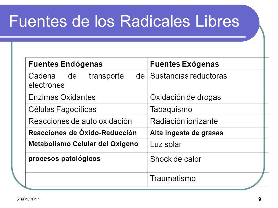 29/01/2014 9 Fuentes de los Radicales Libres Fuentes EndógenasFuentes Exógenas Cadena de transporte de electrones Sustancias reductoras Enzimas Oxidan