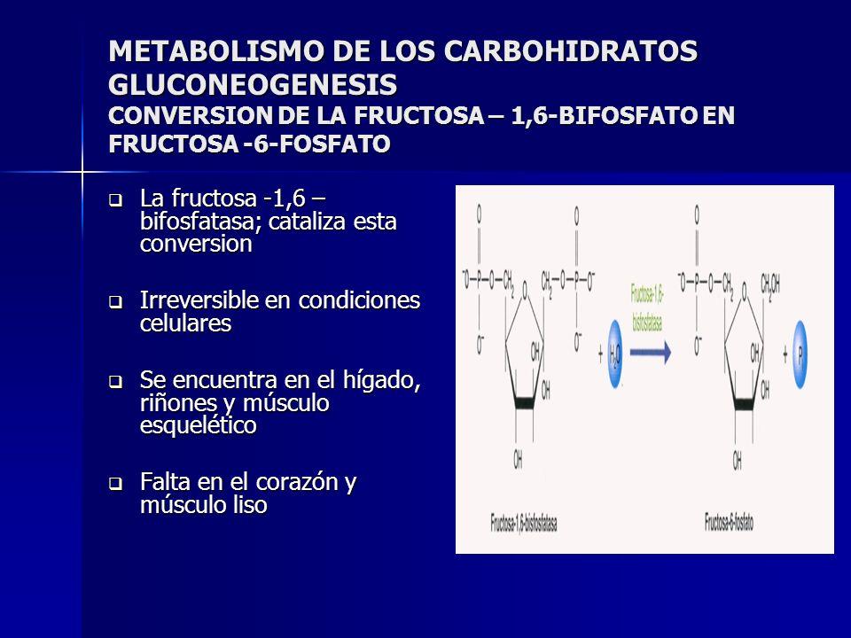 METABOLISMO DE LOS CARBOHIDRATOS GLUCONEOGENESIS CONVERSION DE LA FRUCTOSA – 1,6-BIFOSFATO EN FRUCTOSA -6-FOSFATO La fructosa -1,6 – bifosfatasa; cata