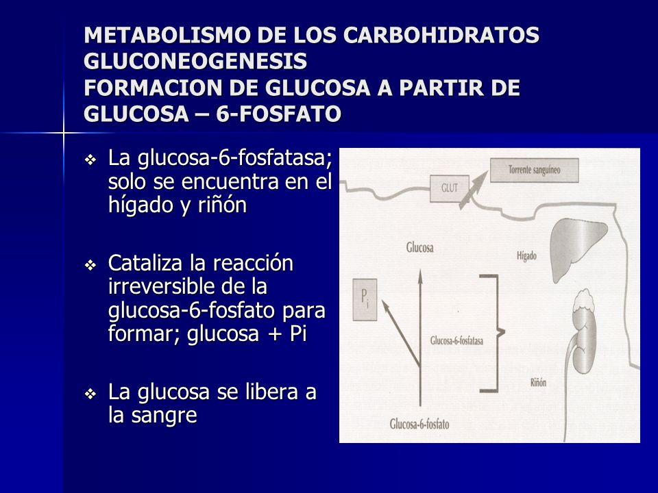 METABOLISMO DE LOS CARBOHIDRATOS GLUCONEOGENESIS FORMACION DE GLUCOSA A PARTIR DE GLUCOSA – 6-FOSFATO La glucosa-6-fosfatasa; solo se encuentra en el