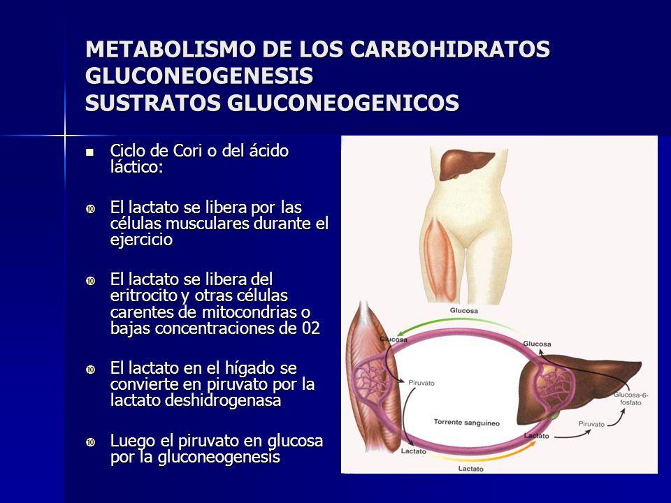 METABOLISMO DE LOS CARBOHIDRATOS GLUCONEOGENESIS SUSTRATOS GLUCONEOGENICOS Ciclo de Cori o del ácido láctico: Ciclo de Cori o del ácido láctico: El la