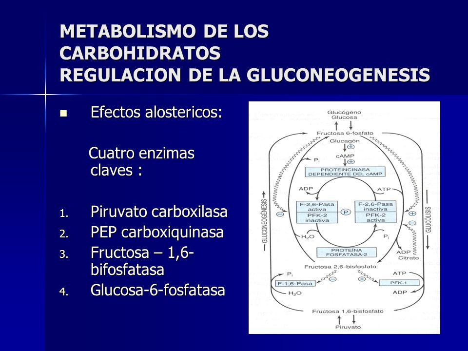 METABOLISMO DE LOS CARBOHIDRATOS REGULACION DE LA GLUCONEOGENESIS Efectos alostericos: Efectos alostericos: Cuatro enzimas claves : Cuatro enzimas cla