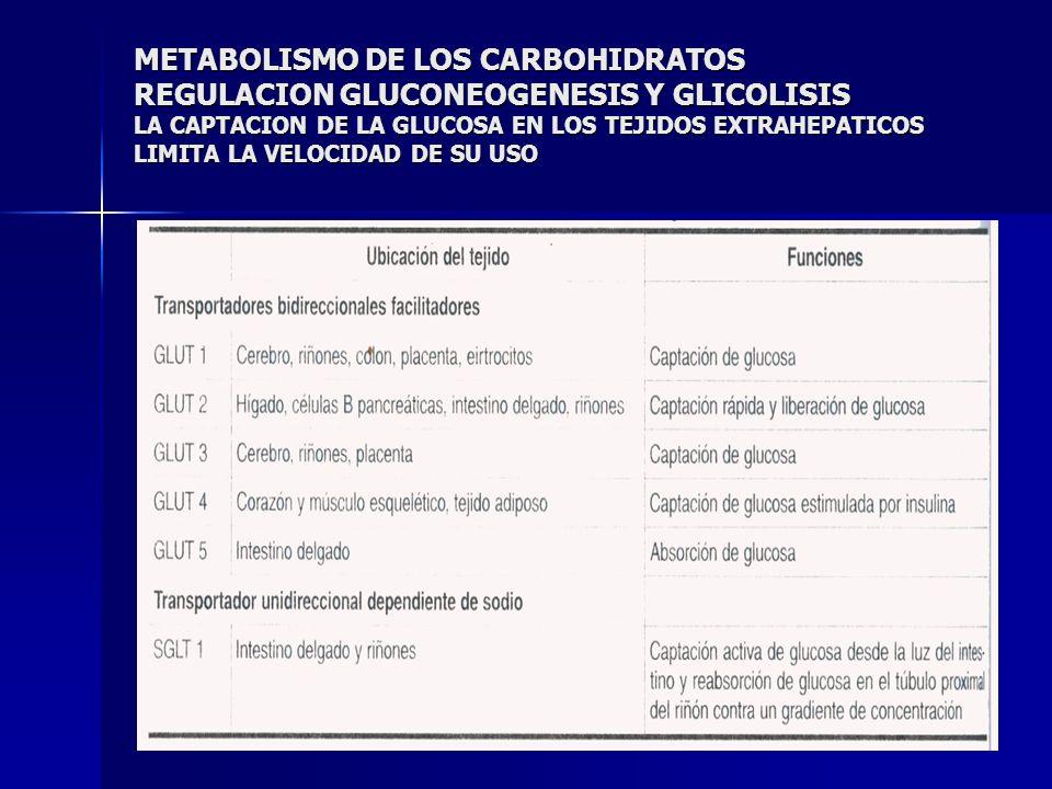 METABOLISMO DE LOS CARBOHIDRATOS REGULACION GLUCONEOGENESIS Y GLICOLISIS LA CAPTACION DE LA GLUCOSA EN LOS TEJIDOS EXTRAHEPATICOS LIMITA LA VELOCIDAD