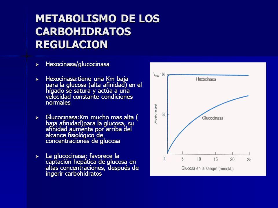 METABOLISMO DE LOS CARBOHIDRATOS REGULACION Hexocinasa/glucocinasa Hexocinasa/glucocinasa Hexocinasa:tiene una Km baja para la glucosa (alta afinidad)