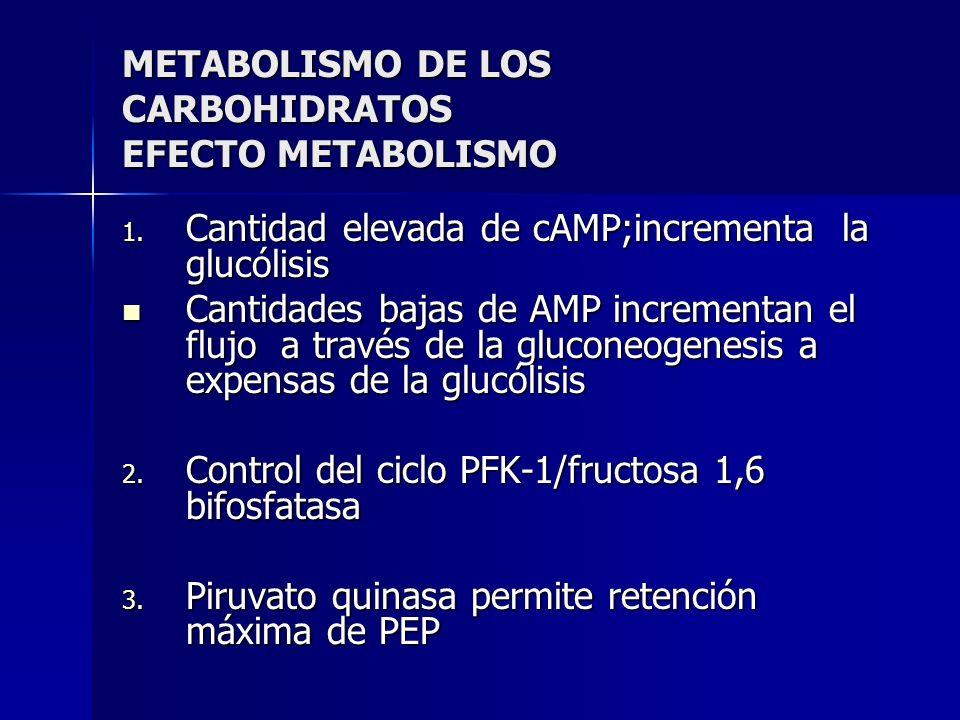 METABOLISMO DE LOS CARBOHIDRATOS EFECTO METABOLISMO 1. Cantidad elevada de cAMP;incrementa la glucólisis Cantidades bajas de AMP incrementan el flujo
