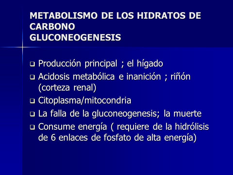 METABOLISMO DE LOS HIDRATOS DE CARBONO GLUCONEOGENESIS Producción principal ; el hígado Producción principal ; el hígado Acidosis metabólica e inanici