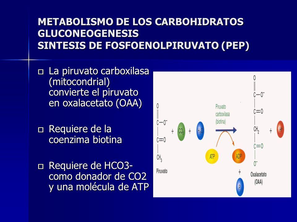METABOLISMO DE LOS CARBOHIDRATOS GLUCONEOGENESIS SINTESIS DE FOSFOENOLPIRUVATO (PEP) La piruvato carboxilasa (mitocondrial) convierte el piruvato en o