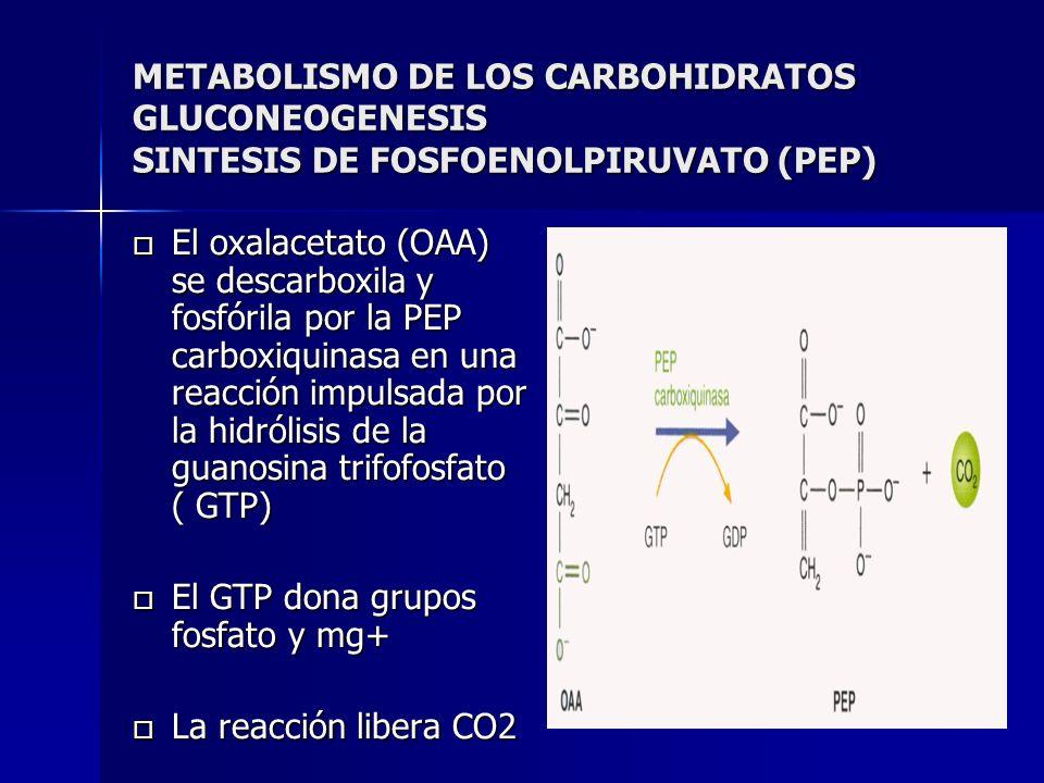 METABOLISMO DE LOS CARBOHIDRATOS GLUCONEOGENESIS SINTESIS DE FOSFOENOLPIRUVATO (PEP) El oxalacetato (OAA) se descarboxila y fosfórila por la PEP carbo