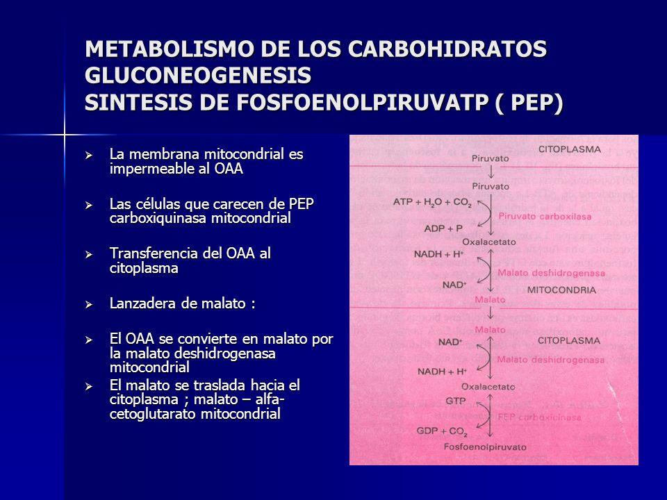 METABOLISMO DE LOS CARBOHIDRATOS GLUCONEOGENESIS SINTESIS DE FOSFOENOLPIRUVATP ( PEP) La membrana mitocondrial es impermeable al OAA La membrana mitoc