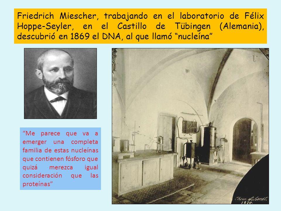 Friedrich Miescher, trabajando en el laboratorio de Félix Hoppe-Seyler, en el Castillo de Tübingen (Alemania), descubrió en 1869 el DNA, al que llamó