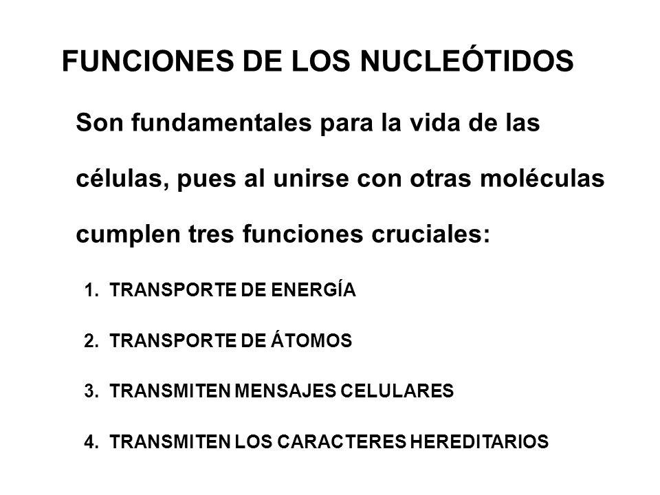 FUNCIONES DE LOS NUCLEÓTIDOS Son fundamentales para la vida de las células, pues al unirse con otras moléculas cumplen tres funciones cruciales: 1.TRA