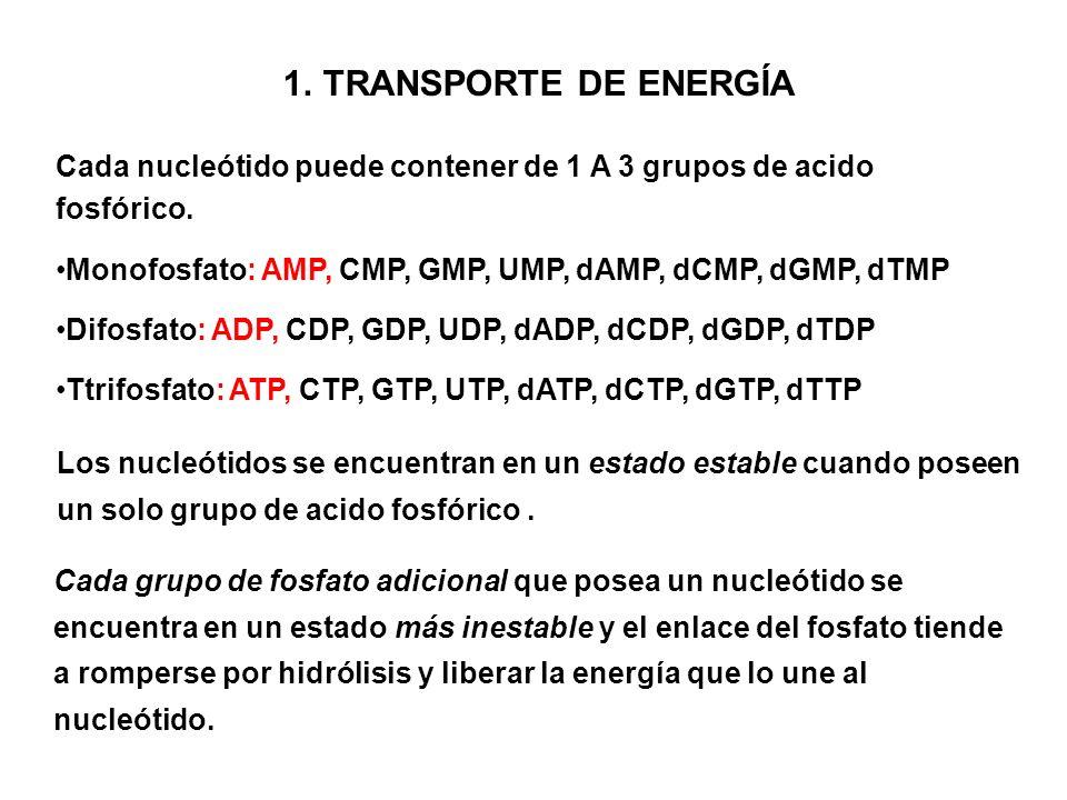 1.TRANSPORTE DE ENERGÍA Cada nucleótido puede contener de 1 A 3 grupos de acido fosfórico. Monofosfato: AMP, CMP, GMP, UMP, dAMP, dCMP, dGMP, dTMP Dif
