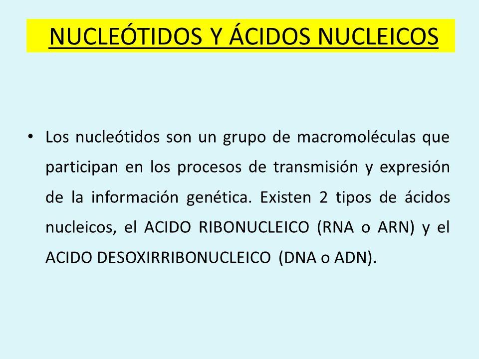 NUCLEÓTIDOS Y ÁCIDOS NUCLEICOS Los nucleótidos son un grupo de macromoléculas que participan en los procesos de transmisión y expresión de la informac