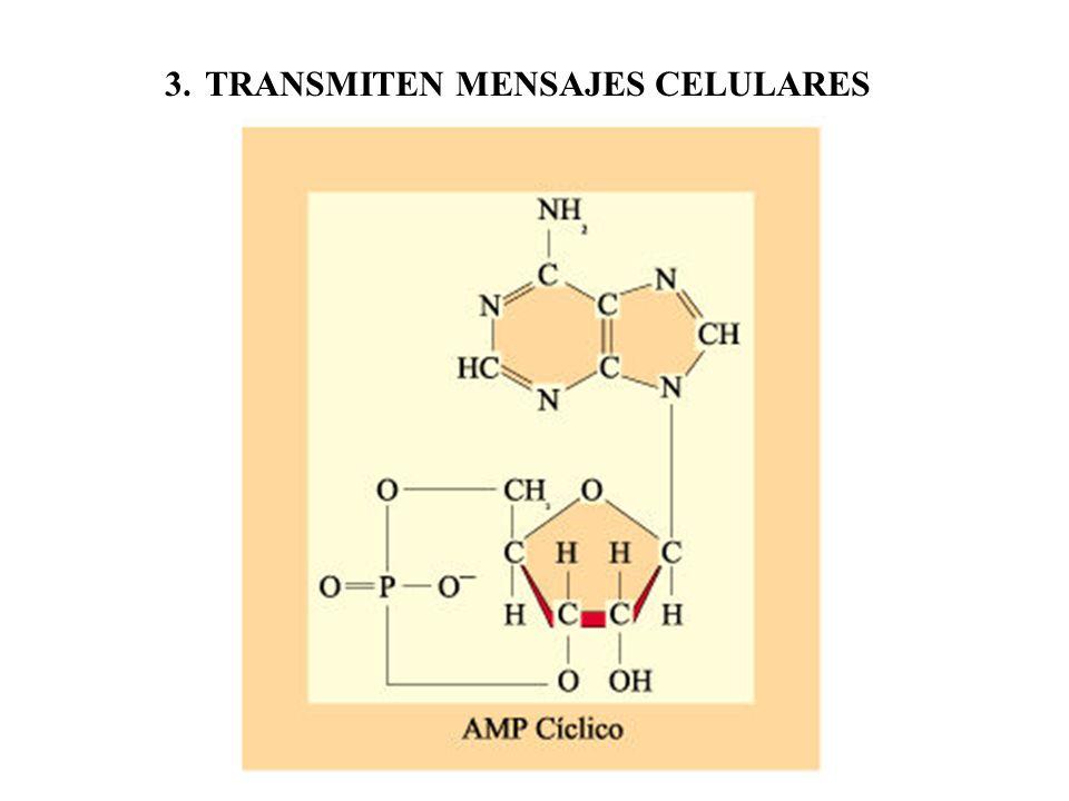 3.TRANSMITEN MENSAJES CELULARES