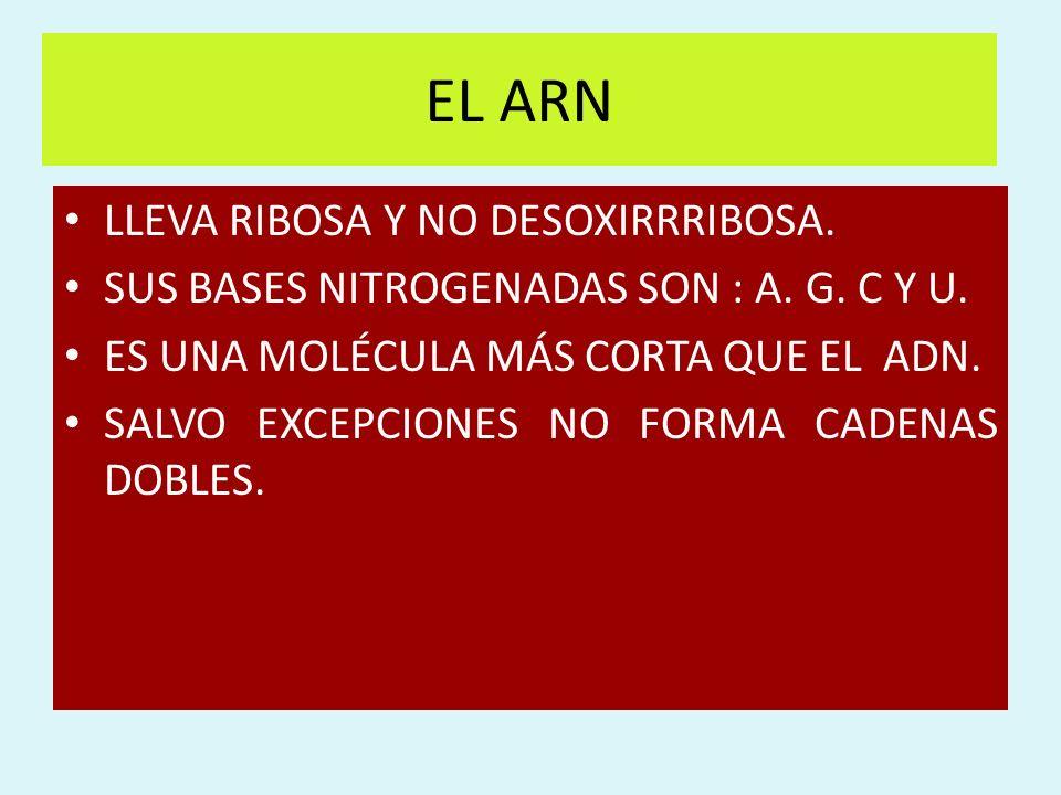 EL ARN LLEVA RIBOSA Y NO DESOXIRRRIBOSA. SUS BASES NITROGENADAS SON : A. G. C Y U. ES UNA MOLÉCULA MÁS CORTA QUE EL ADN. SALVO EXCEPCIONES NO FORMA CA
