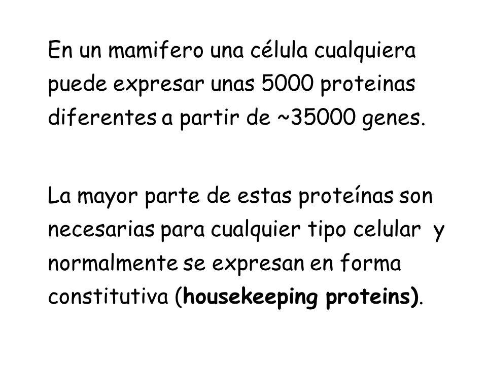 En un mamifero una célula cualquiera puede expresar unas 5000 proteinas diferentes a partir de ~35000 genes. La mayor parte de estas proteínas son nec