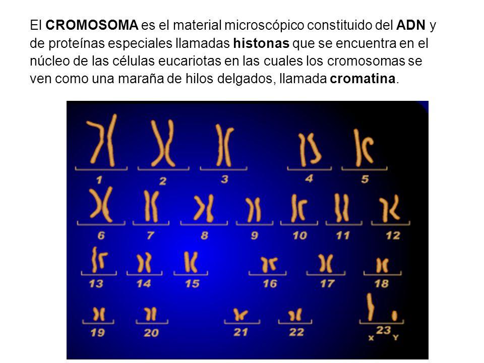 El CROMOSOMA es el material microscópico constituido del ADN y de proteínas especiales llamadas histonas que se encuentra en el núcleo de las células