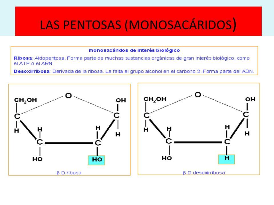 LAS PENTOSAS (MONOSACÁRIDOS )